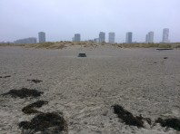 Amager Strand (beach)