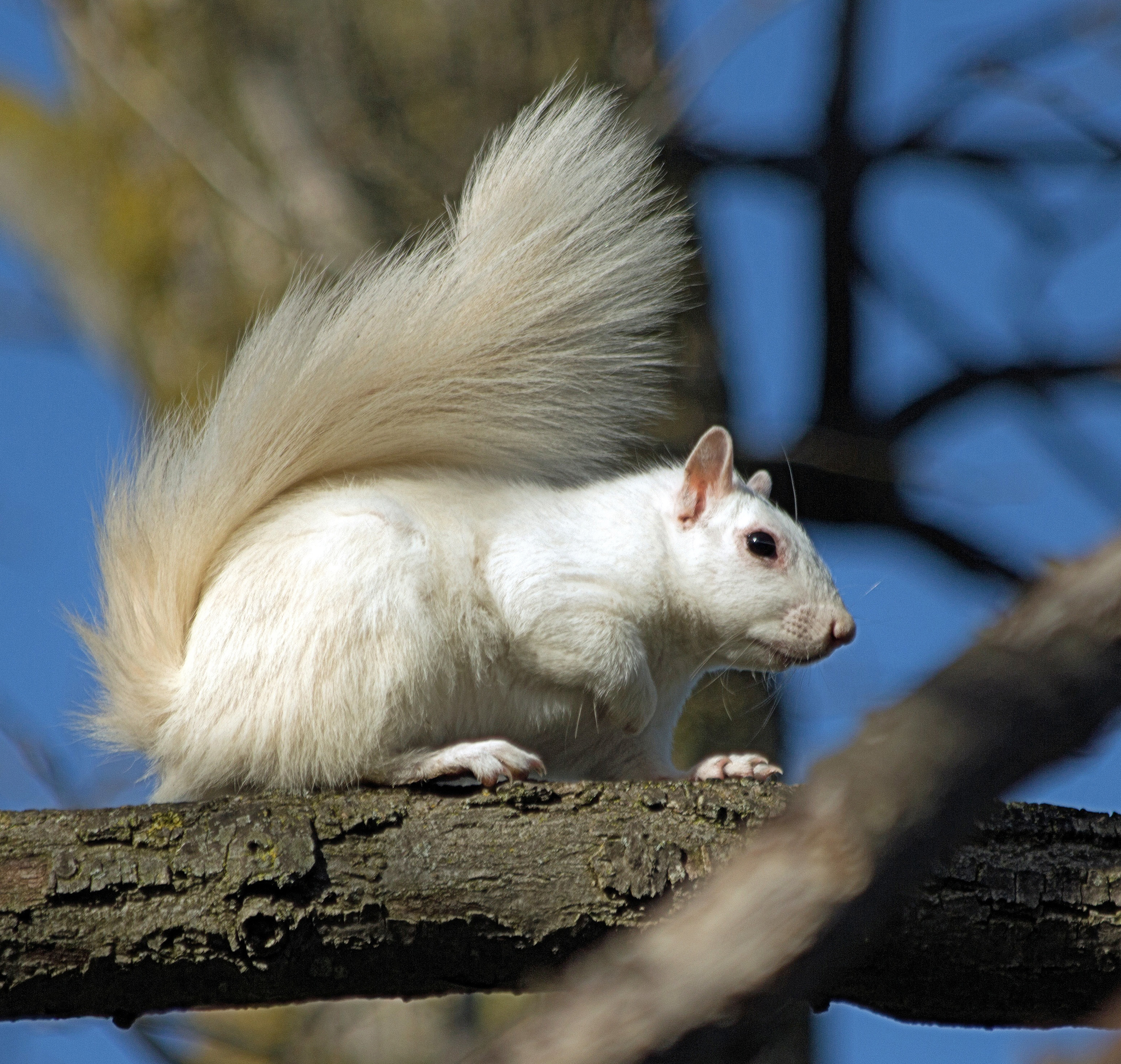 wh squirrel 2