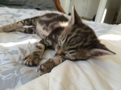 Sésame kitten 2