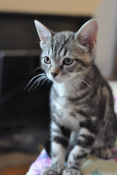 Sésame kitten 3